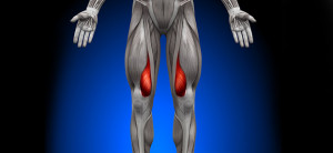 knee-diagram